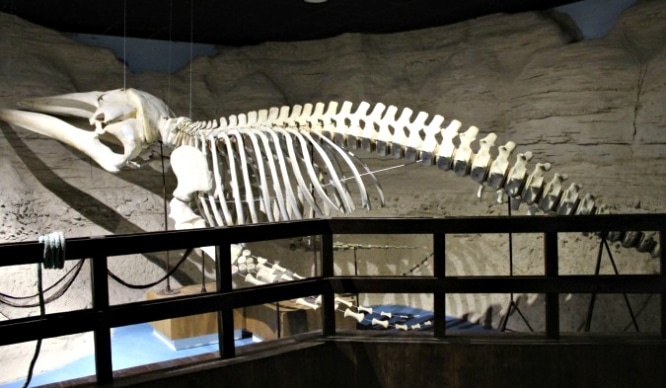 Se expone el esqueleto de una ballena en Sevilla