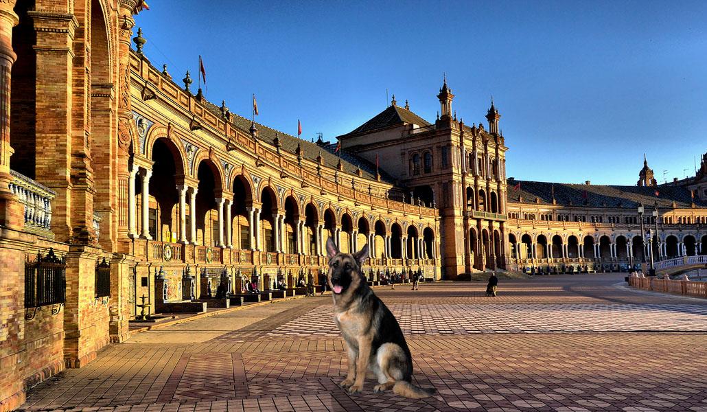 Sevilla tiene más de medio millón de mascotas
