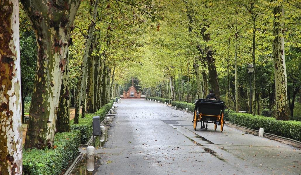 Sevilla tendrá 7000 árboles más en 2018