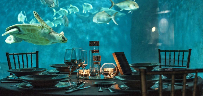 eventos acuario sevilla