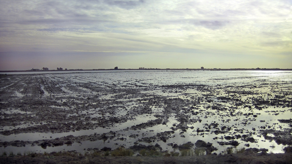 Arrozales de Isla Mayor. Doñana y bajo Guadalquivir.