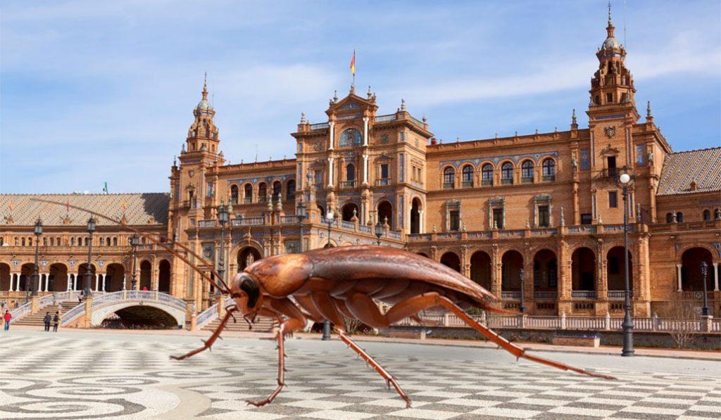 Las cucarachas pasan sus vacaciones de verano en Sevilla