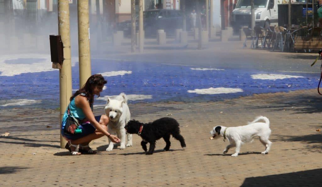 El Ayuntamiento de Sevilla exigirá limpiar el orín de las mascotas a sus propietarios