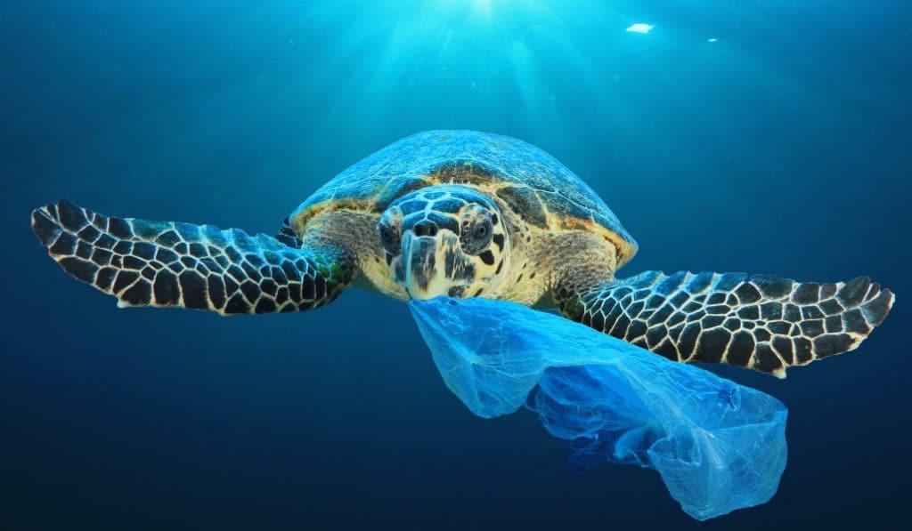 Sevilla se despide de las bolsas de plástico de un solo uso