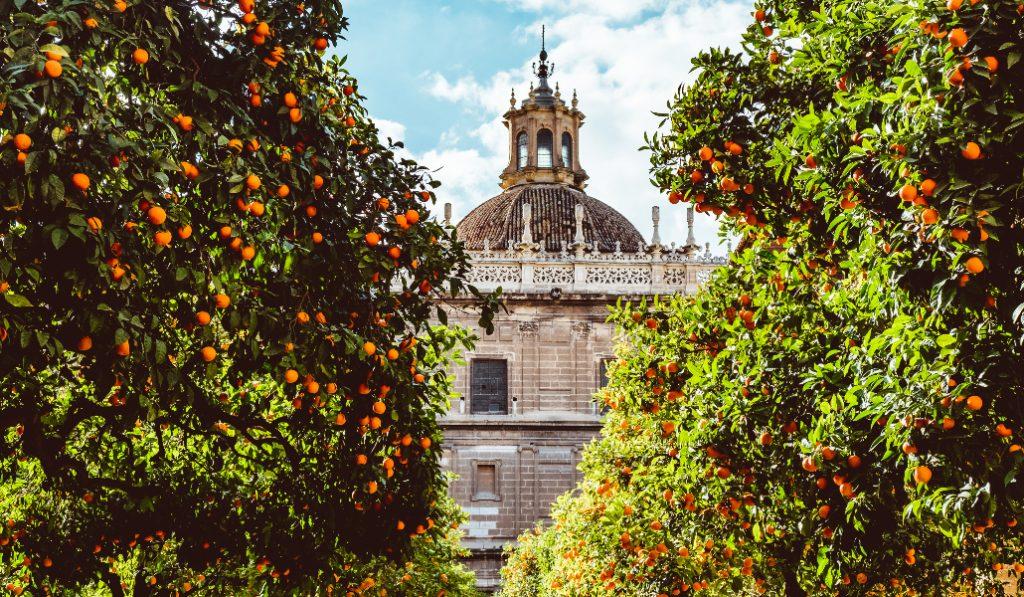 El hilo de Twitter sobre las naranjas amargas y un noruego en Sevilla revoluciona Twitter