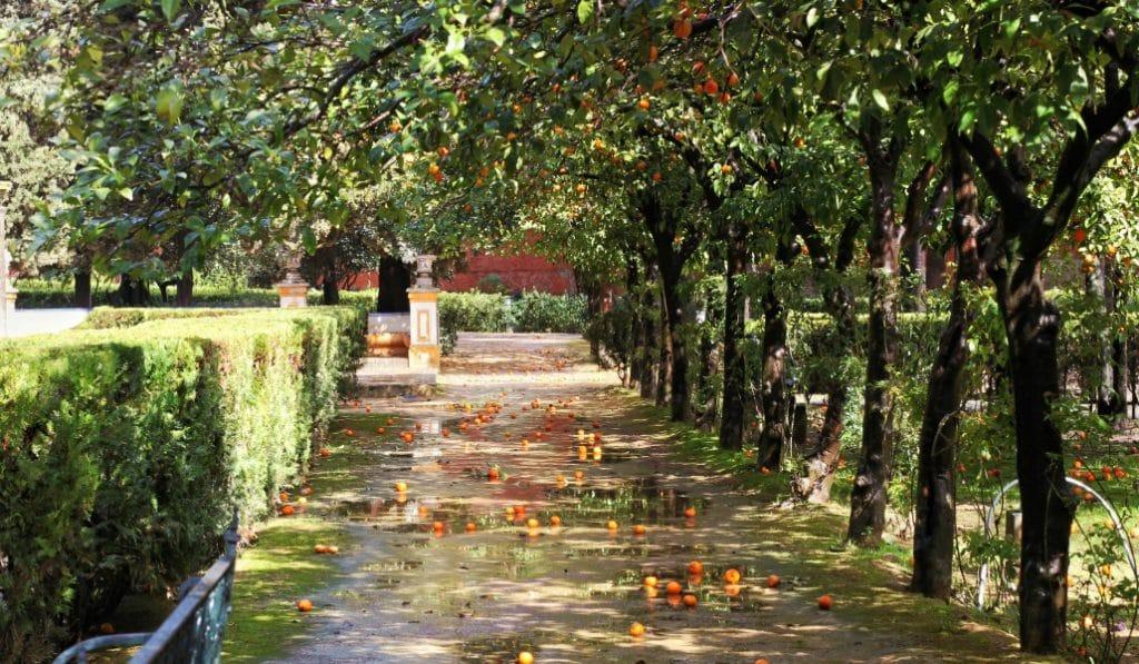 Ciudadanos anónimos salvan los árboles asfixiados de Sevilla