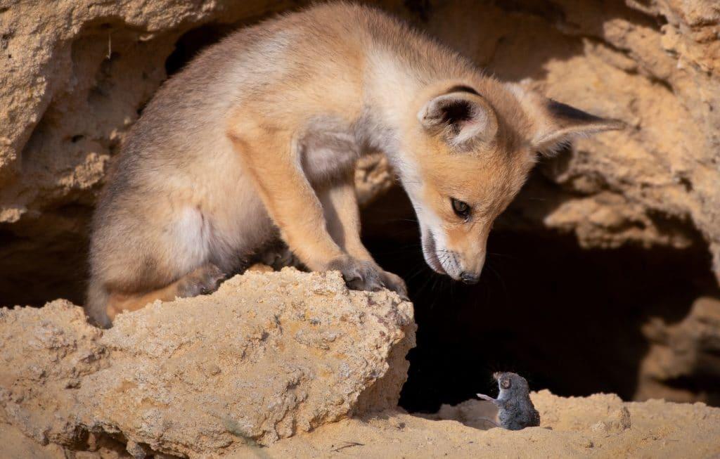 Estas son las fotos más divertidas del mundo animal en 2020