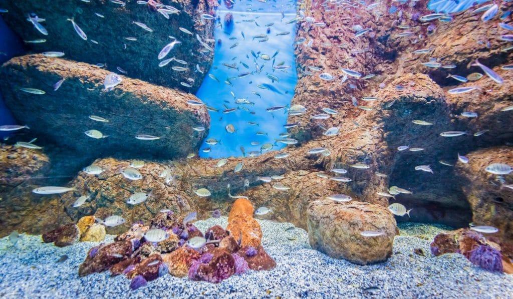 El Acuario de Sevilla te descubre los ecosistemas por los que navegaron Magallanes y Elcano