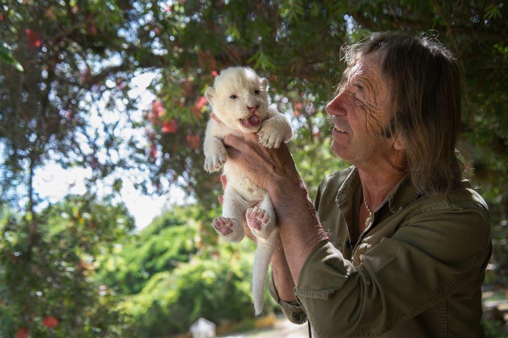 The White King: el primer león blanco sin enfermedades nace en Sevilla