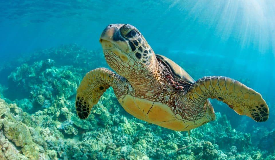 El Acuario lanza un campamento de verano en torno a las crías de la tortuga marina