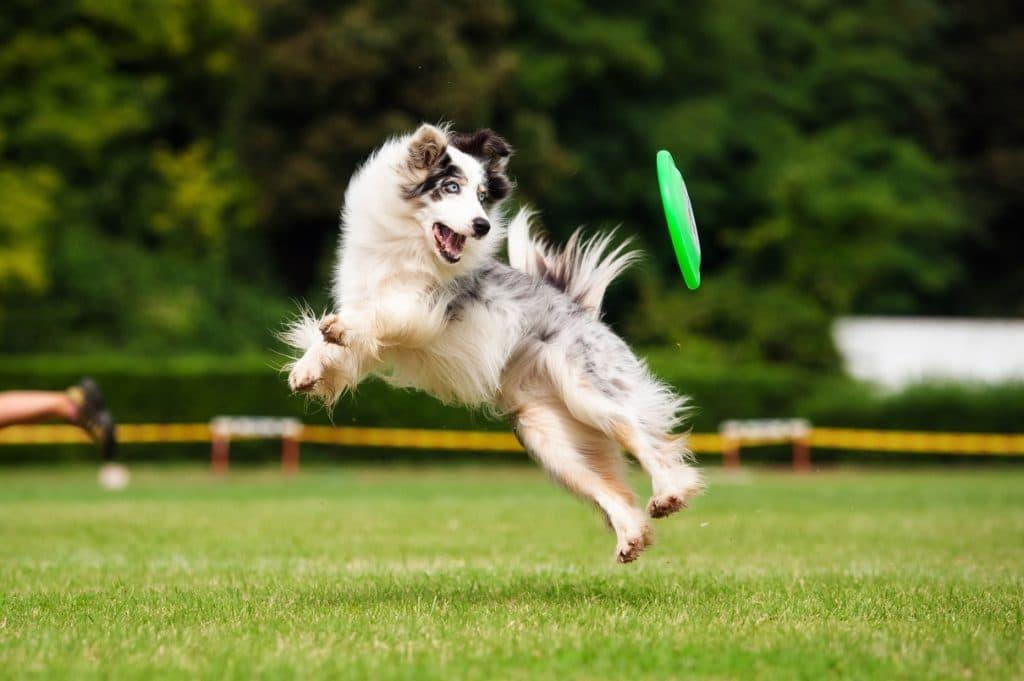 Una sorprendente exposición canina se celebrerá en el Parque del Alamillo