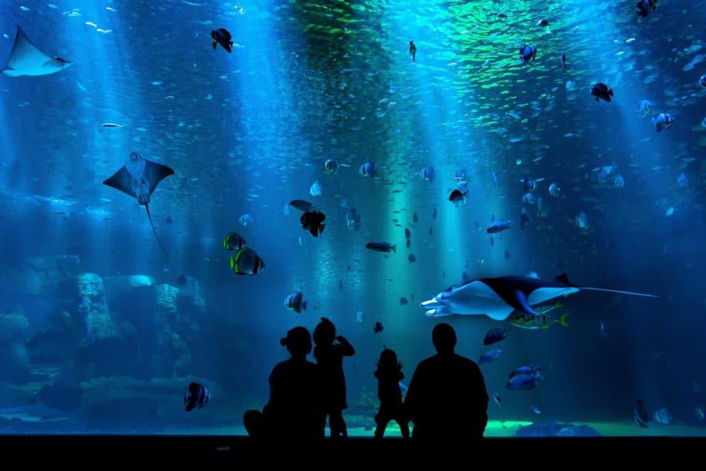 México tendrá el acuario más grande de América Latina