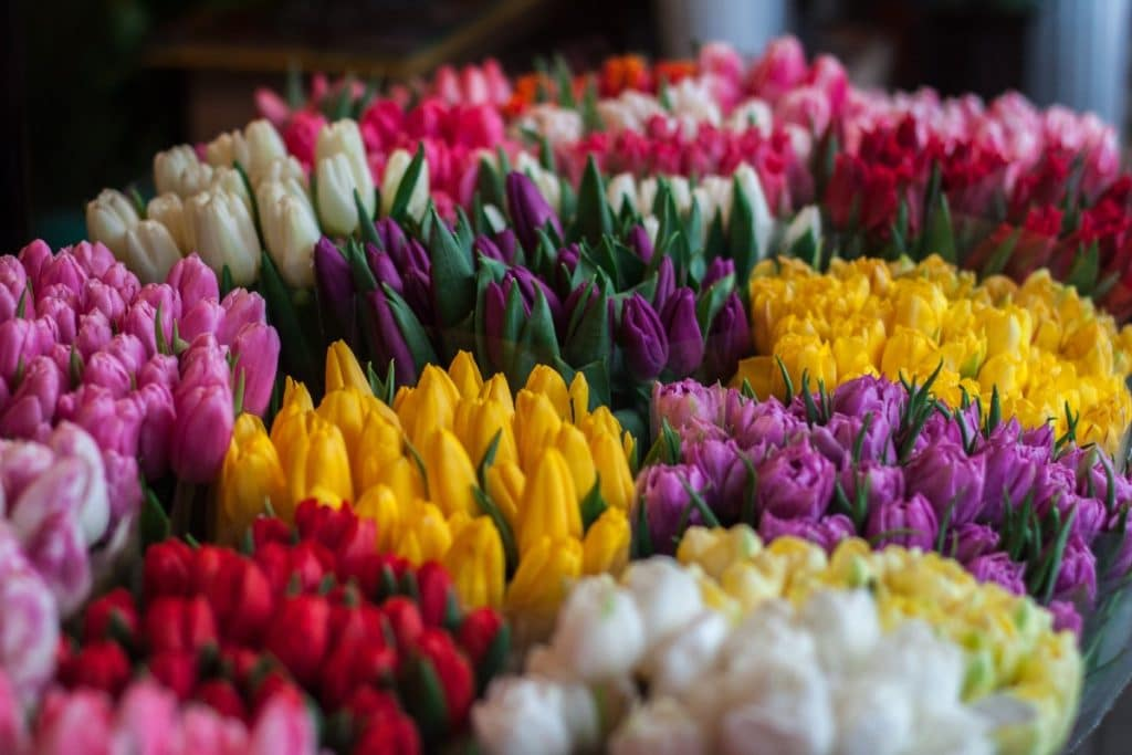 mercato fiori torino