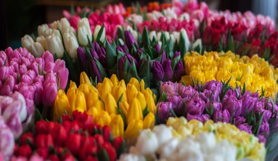 Mercato dei fiori a Torino: un'esplosione di colori in città