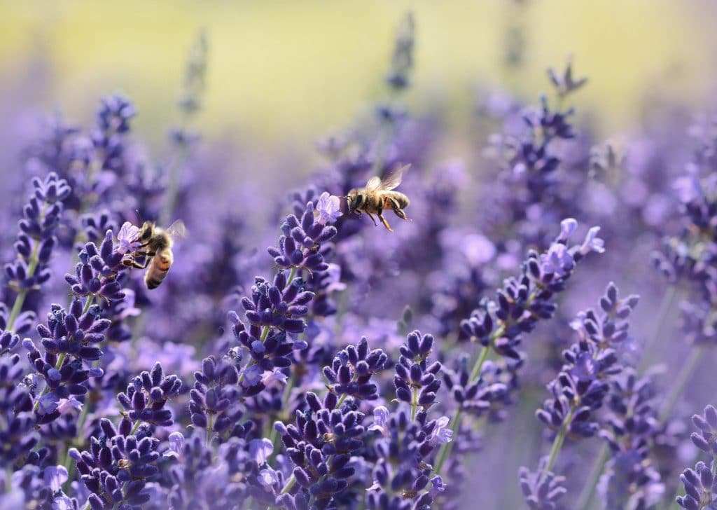 piante api