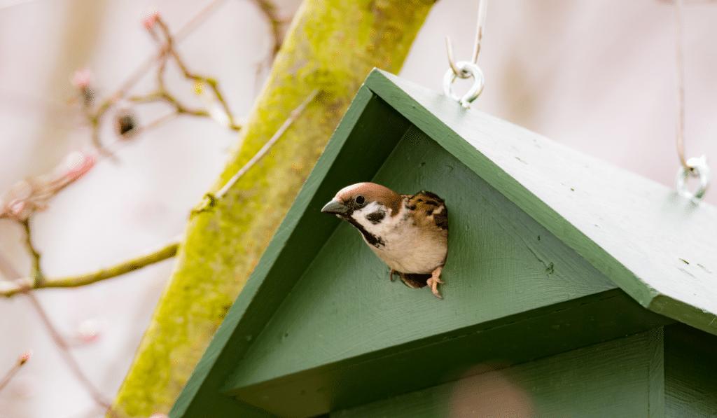 Des nichoirs à oiseaux offerts aux riverains du Canal du Midi !