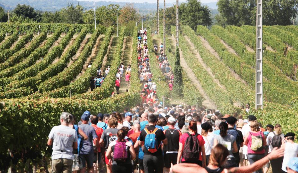 Un Vignoble du Gers organise un grand Trail Épicurien au milieu des vignes !