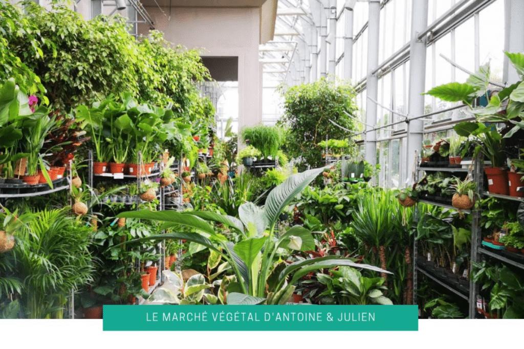 Grande Vente de Plantes à partir de 2€ ce Weekend à Toulouse !