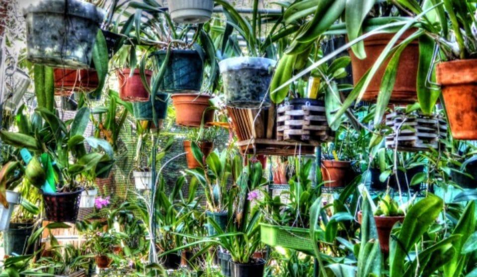 Toulouse accueille ce week-end une grande vente de plantes à petit budget!