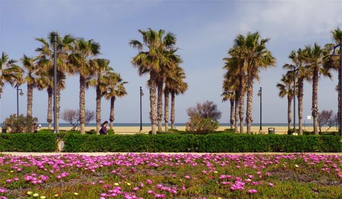 Llega la primavera: instrucciones para disfrutarla al máximo si vives en Valencia
