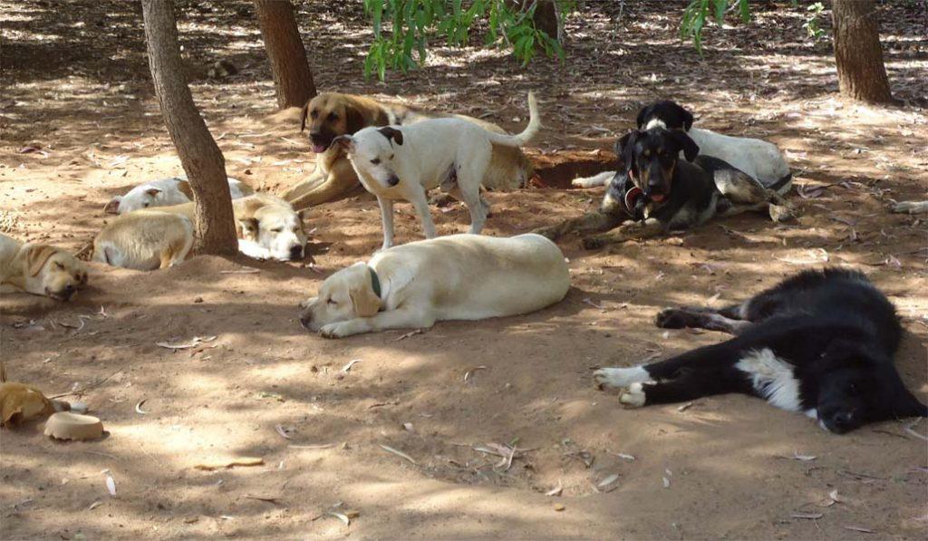 Empresas contra protectoras por la protección animal