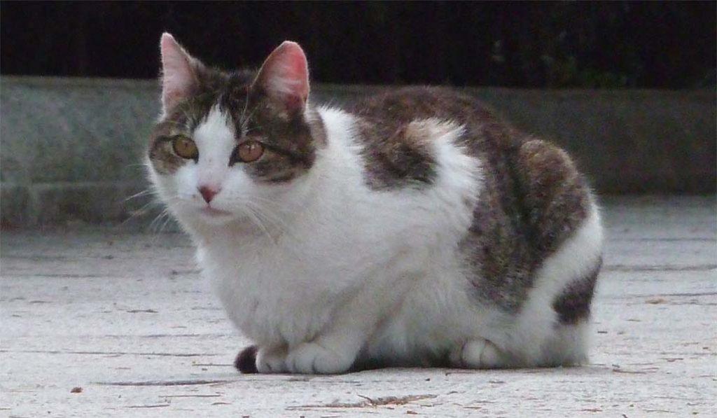 Más de 200 gatas se esterilizarán en las colonias