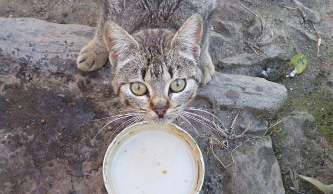 gato callejero comida