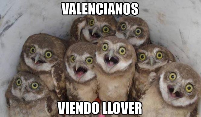 valencianos viendo llover meme