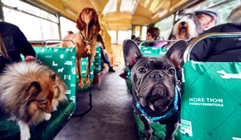 mascotas bus valencia