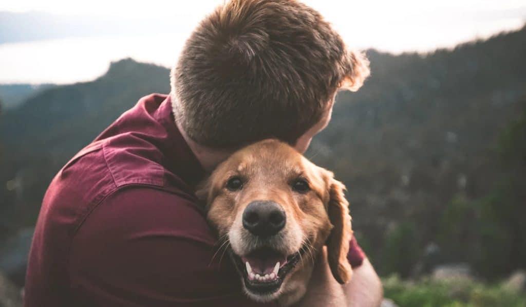 valencia pet friendly
