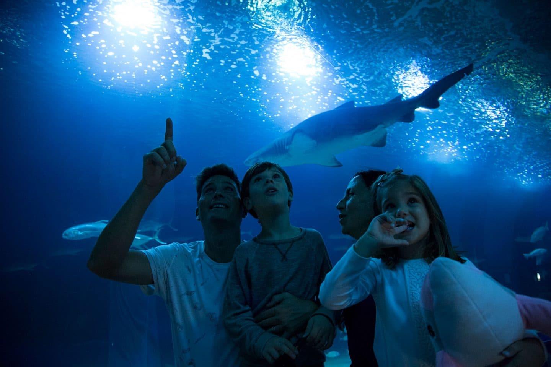 ¿Sabías que en Valencia puedes dormir con tiburones?
