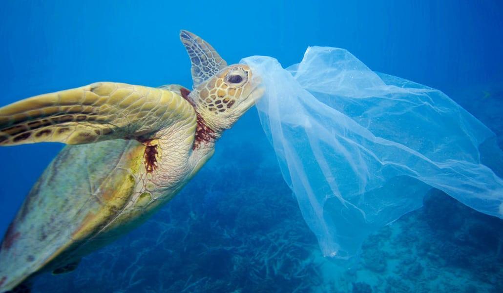 wwf tortuga plástico