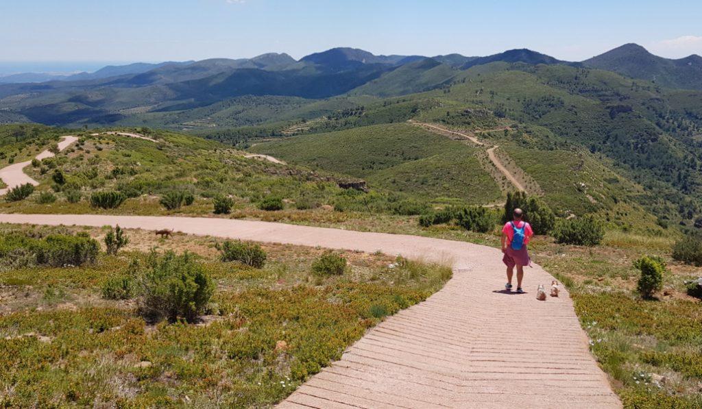 bosque comunidad valenciana