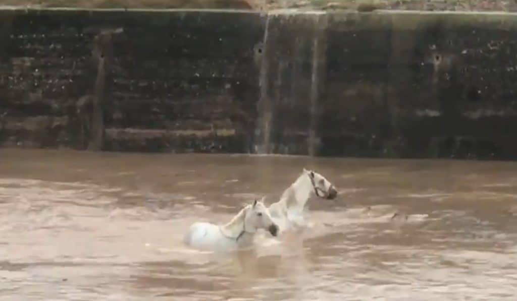 Vídeo: Dos caballos quedan atrapados en las aguas del río Margo en Algemesí