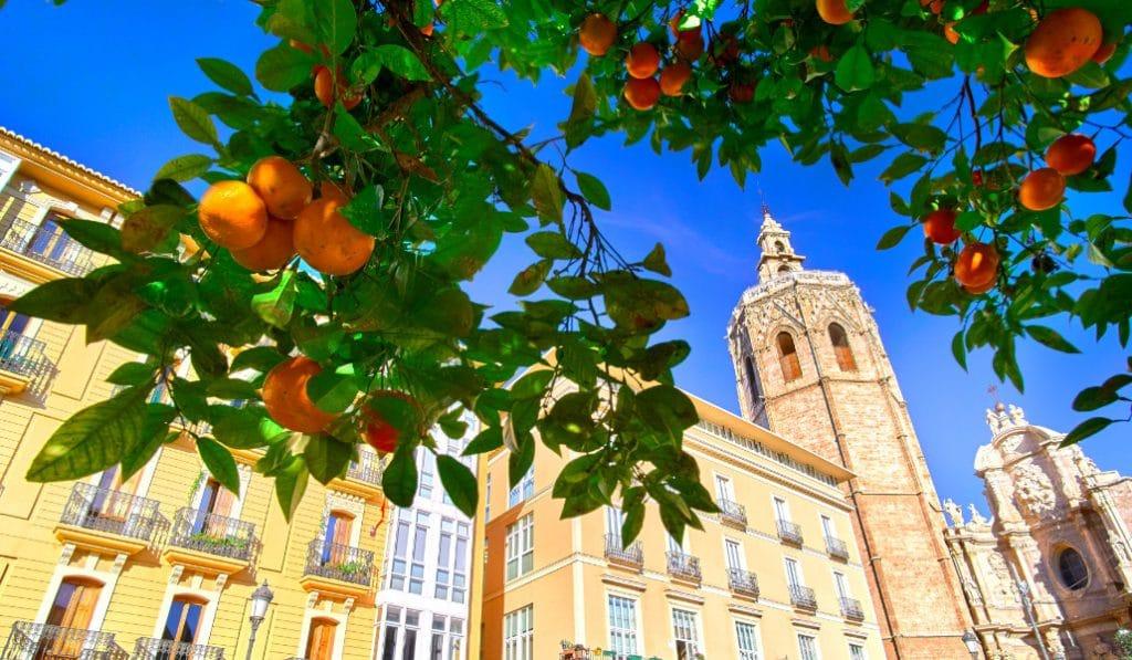 ¿Por qué no se pueden comer las naranjas de la calle?
