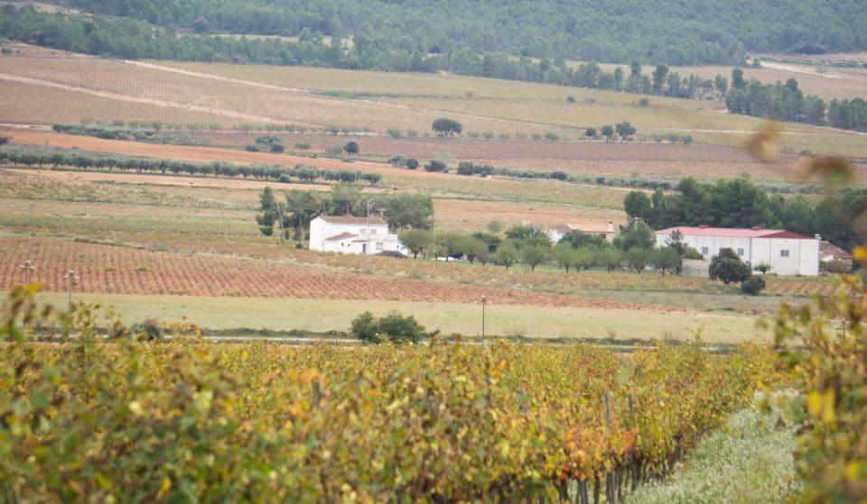 Terres dels Alforins: la Toscana valenciana