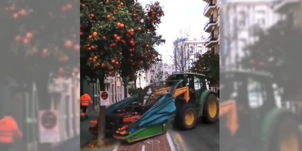 Así se recogen las naranjas en las calles de Valencia