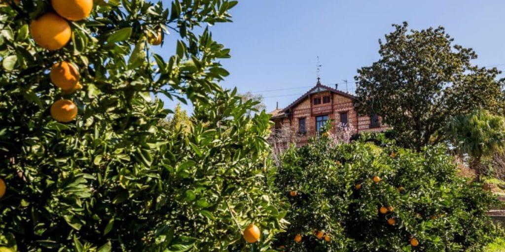 Visitas guiadas al Huerto San Eusebio: un referente en el cultivo de cítricos ecológicos